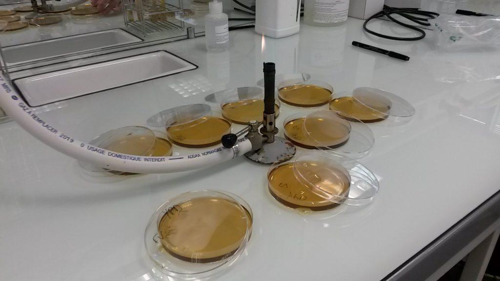 TP de microbio, ou comment faire mumuse avec des levures !