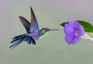 le vol du colibri